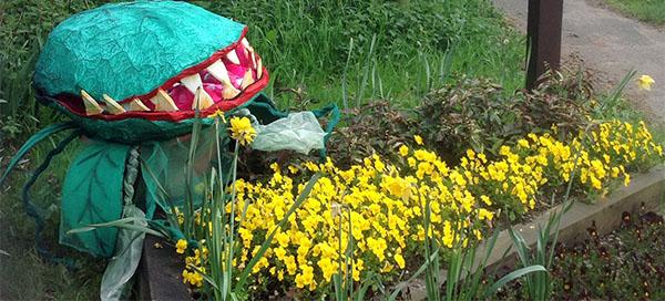 Alien plant invades Kings Langley