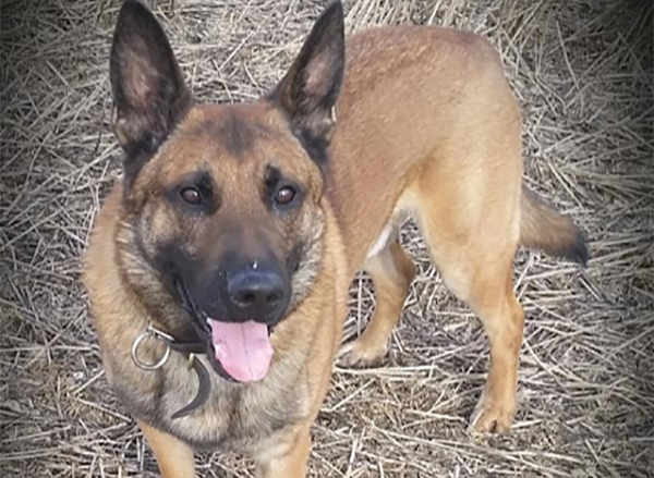 Two men caught red-handed by police dog at scene of burglary in Bushey