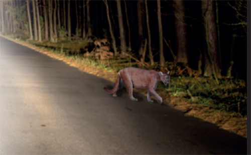 Another 'big cat' sighting in St Albans